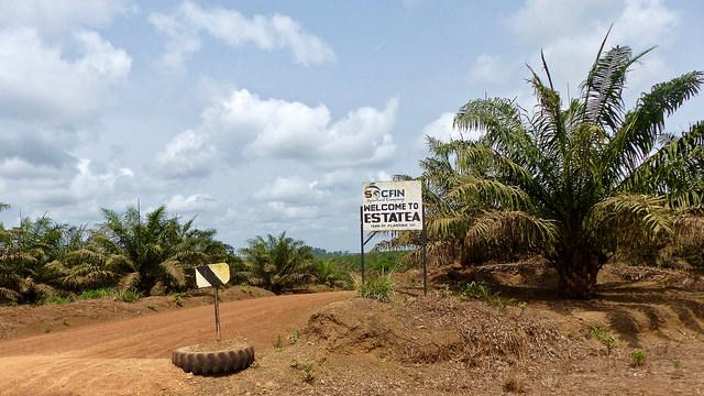 Plantation de palmiers à huile Sierra Leone - mars 2018 copyright @FIAN Belgium